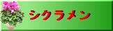 シクラメン:高品質シクラメンギフト