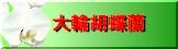 胡蝶蘭(大輪)